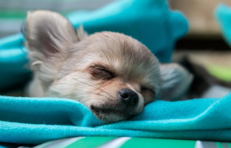 Hundedecke, Hundematte jetzt günstig online kaufen