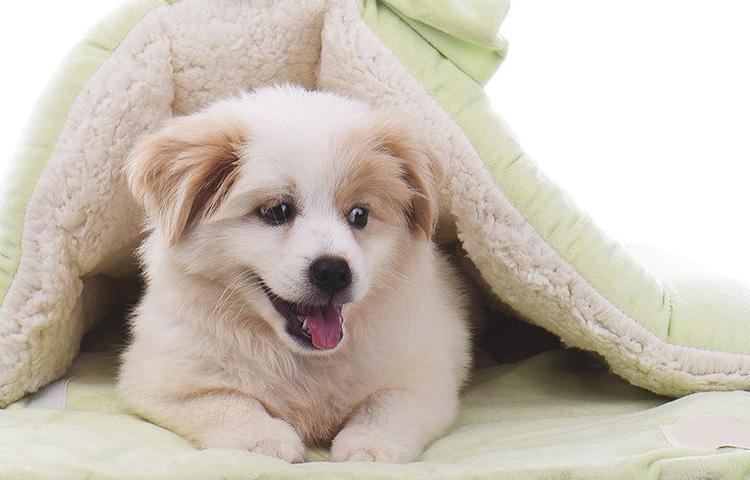 Hundeschlafsack jetzt günstig online kaufen